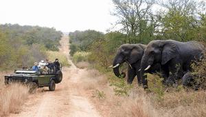 Africa-Makutsi-gamedrive