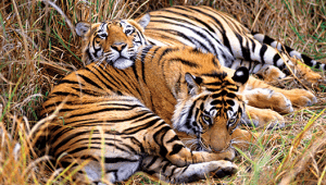 india-Best-of-Rajasthan-&-Kerala-Ranthambore-National-Park
